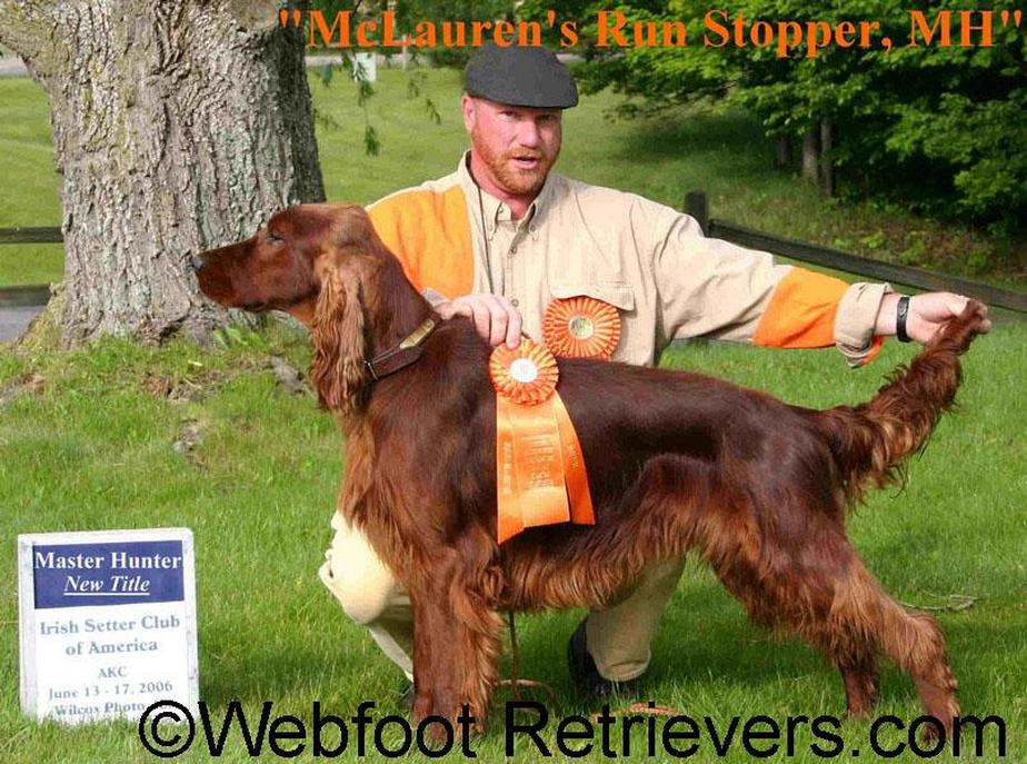 Bird Dog Training South Carolina Webfoot Retrievers