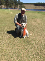 Labrador Retriever Training South Carolina Webfoot Retrievers