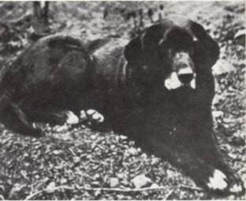 Webfoot Retrievers Ray Godwin